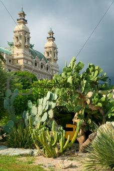 cactus in park (Monte Carlo)