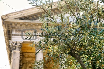 olive tree and  temple column on background