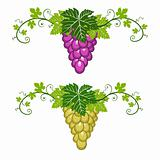Grapes border with leaves on white background