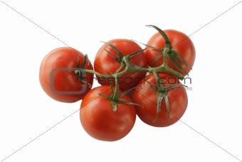 Tomato on stem isolated