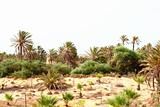 oasis in Tunisia