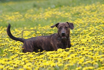 on the dandelion meadow