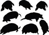 moles collection