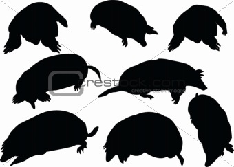 moles collection