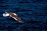Bird a seagull
