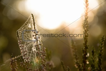 a twig with the spiderweb