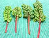 Four red stemmed chard on green background