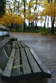 A bench in a park with foliage in Autumn