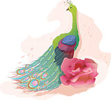 Peacock with pink rose