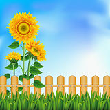 Background with sunflowers. Mesh.