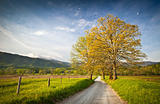 Cade&#39;s Cove Dirt Road Hyatt Lane on Spring Morning