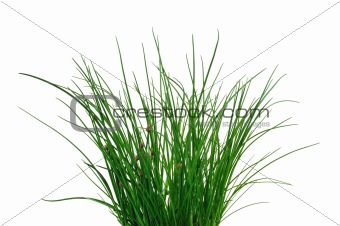 Fresh chives isolated on white background