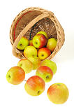 Fresh apples spilling out of basket - isolated on white background