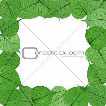 Skeletal leaves on white background - frame