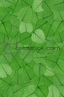 Green skeletal leaves - background.