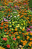 mini flower in garden