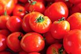 organic tomato in market