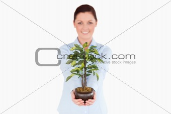 Attractive red-haired woman holding a houseplant while standing