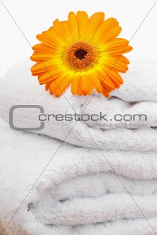 An orange sunflovers on white towels
