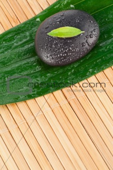 A small leaf on a black stone on a bigger leaf