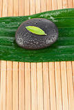 Close up of a small leaf on a black stone on a bigger leaf