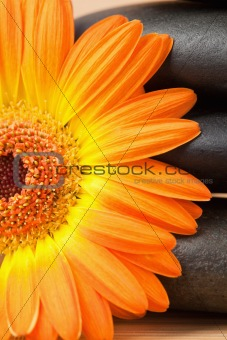 Close up of a black stones stack and an orange sunflower