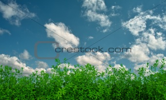 flax on background of sky