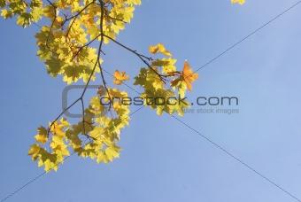An autumn branch