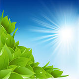 Nature Background With Leafs