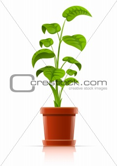 plant in flowerpot