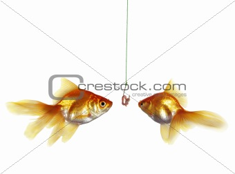 gold fish and earthworm