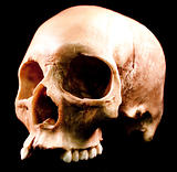 Human skull - bone head dead teeth spooky scary pirate isolated
