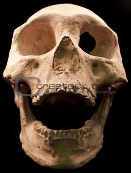 Human skull - bone head dead teeth spooky scary pirate isolated