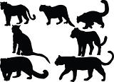 leopards collection silhouettes - vector