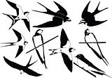 swallows silhouette collection