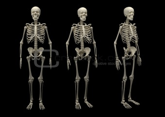 2862 Skeleton isolated(64).jpg