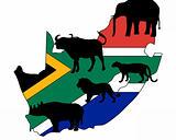 Big Five South Africa