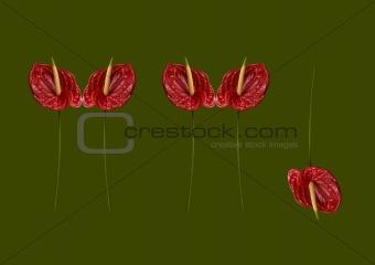Anthurium graphic  composition 2
