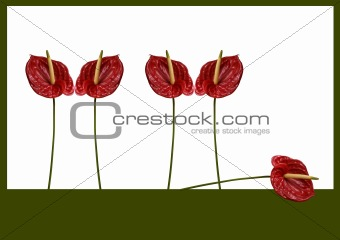 Anthurium graphic  composition