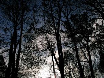 Beams through trees