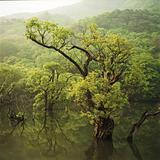 tree in zoosanjii