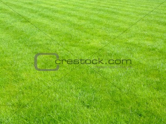 New football grass