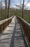 Raised wooden boardwalk