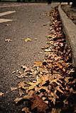 Leaves on road