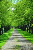 Green tree lane