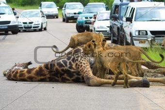 African Traffic Jam