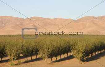 California Farmland #6