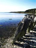 Coastal Stumps