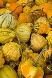 Gourd Mix