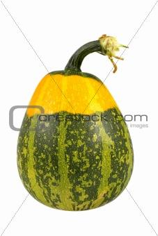 Green and yellow pumpkin